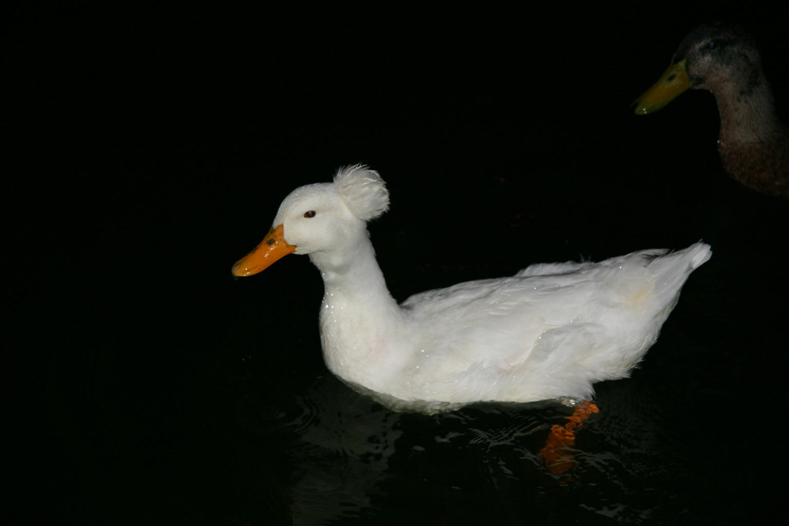 """Aflac"" rules the roost at Alton Marina"
