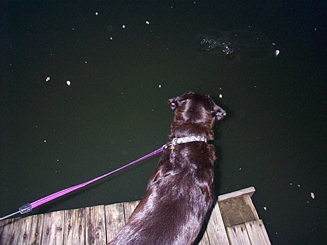 Maggie meets the catfish at Midway Marina